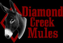 Mule Training with Tim Doud, John Lyons Certified Trainer –  Mule Sales – Mule Breeding – Diamond Creek Mules